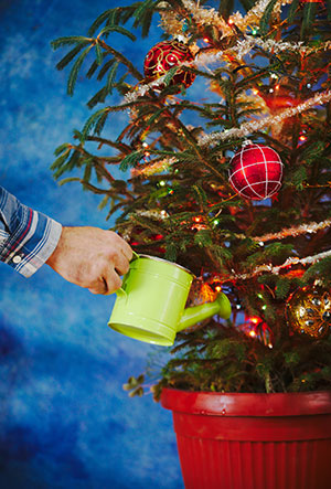 Are You Doing Your Best at Christmas Tree Watering?